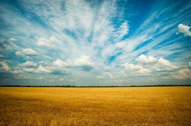 campi grano